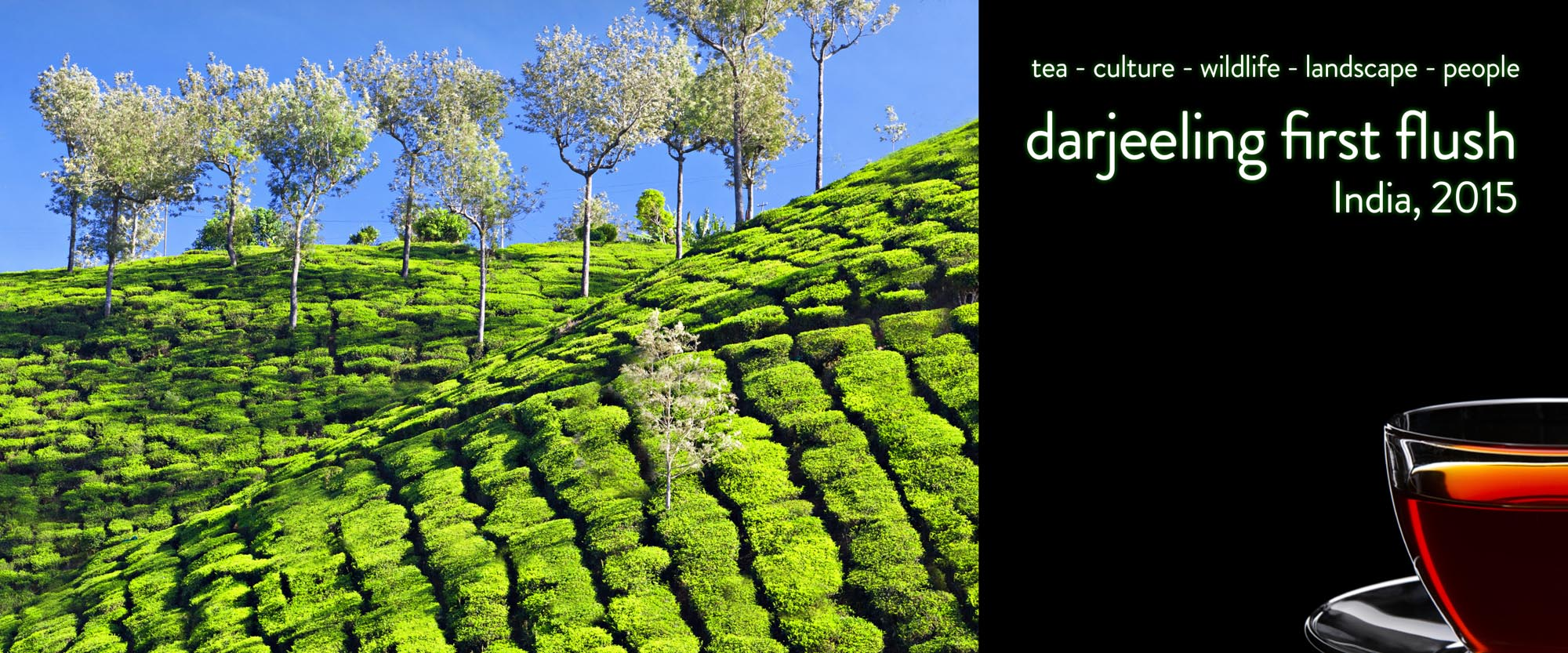 first_flush_darjeeling_2015